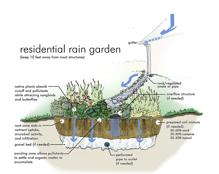 Rain Garden Illustration